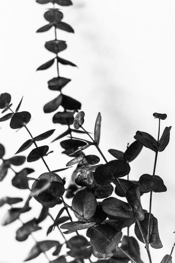 Print - Eucalipto 2 Schwarz Weiß