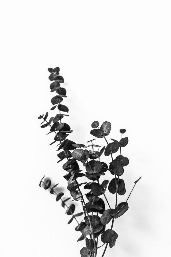 Eukalyptus Art Print schwarzweiss